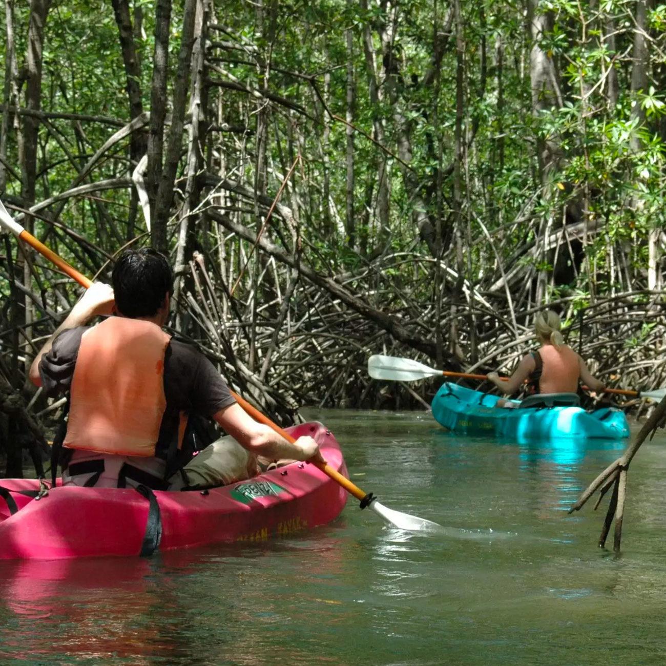 tours-damas-island-mangrove-tour